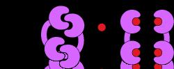 iDimerize inducible protein-protein interactions_ Reverse Dimerization